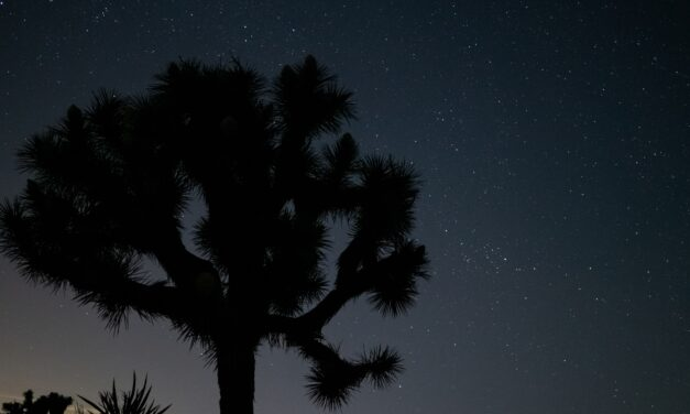 Solar Projects Impacted As Joshua Tree Moves Closer To Being Protected Species